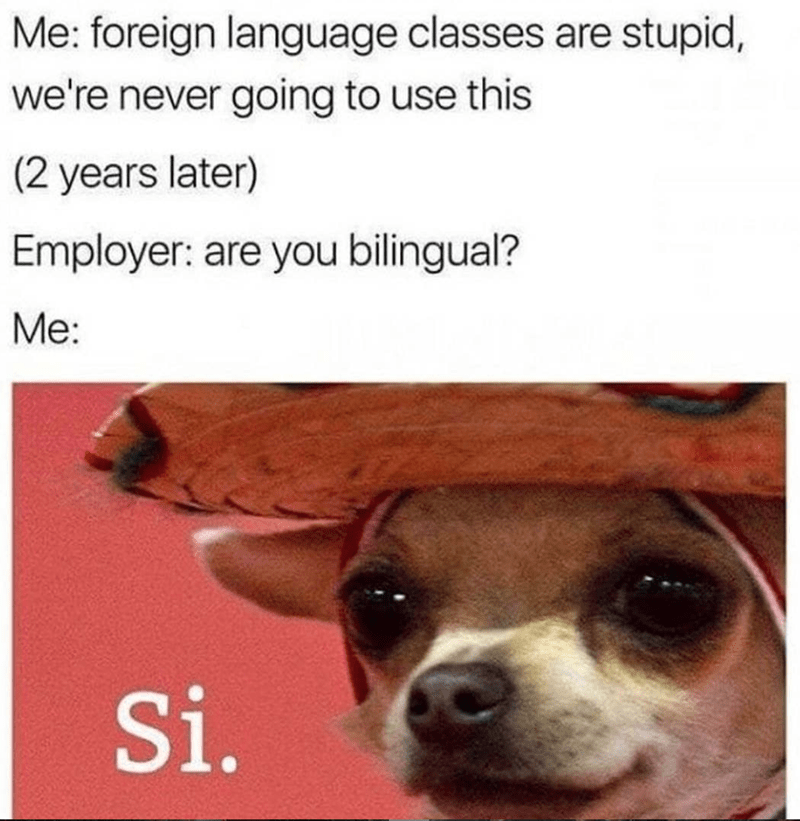 Dog - Me: foreign language classes are stupid, we're never going to use this (2 years later) Employer: are you bilingual? Me: Si.