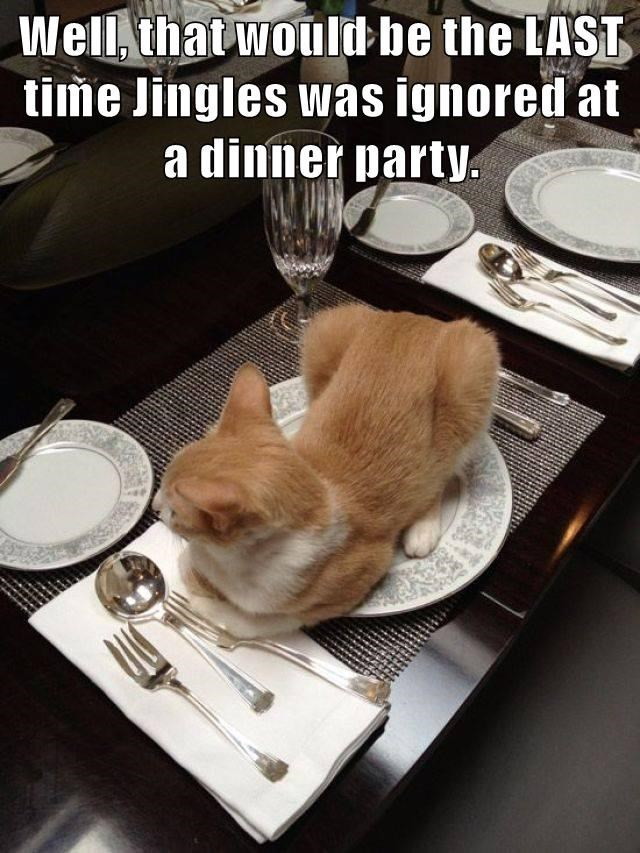 Cat - Well, that would-be the LAST time Jingles was ignored at a dinner party.