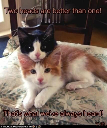 Cat - Two heads are better than one! That's what welve always heard! VidM ICANHASCHEE2EURGER cOM