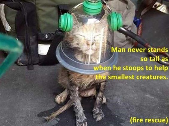 Man never stands so tall as when he stoops to help the smallest creatures. (fire rescue)