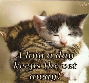 Cat - VaM A hug a day keeps the vet aany!