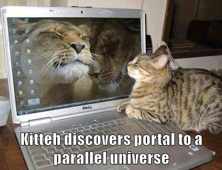 Cat - DELL Kitteh discovers portal to a parallel universe