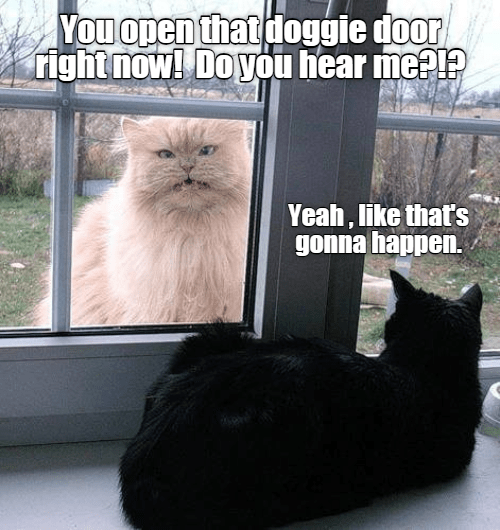 Cat - You open that doggie door right now! DoyOu hear meal? Yeah, like that's gonna happen.