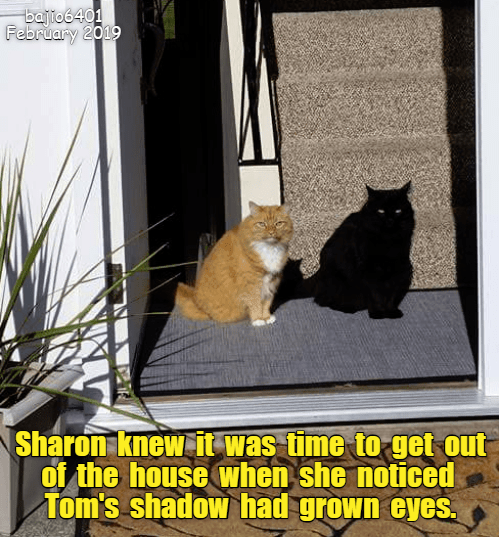 Cat - bajto6401 February 2019 Sharon knew it was time to get out of the house when she noticed Tom's shadow had grown eyes.
