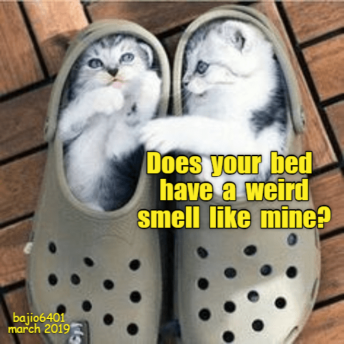 Photo caption - Does your bed have a weird smell like mine? bajio6401 march 2019