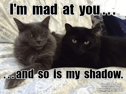Cat - I'm mad at you. aand so is my shadow. bajfo6401 march 2019