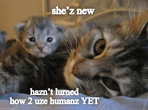 Cat - she'z new hazn't lurned how 2 uze humanz YET