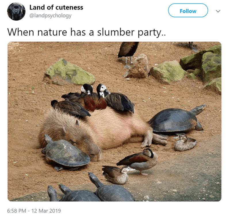 Tortoise - Land of cuteness Follow @landpsychology When nature has a slumber party.. 6:58 PM - 12 Mar 2019