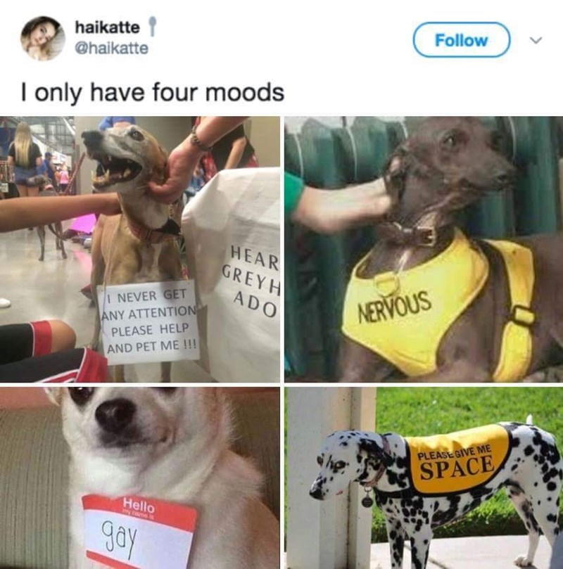 Text - Dog - Follow haikatte @haikatte I only have four moods HEAR GREYH ADO NERVOUS I NEVER GET ANY ATTENTION PLEASE HELP AND PET ME !!! PLEASE GIVE ME SPACE Hello y navne gay
