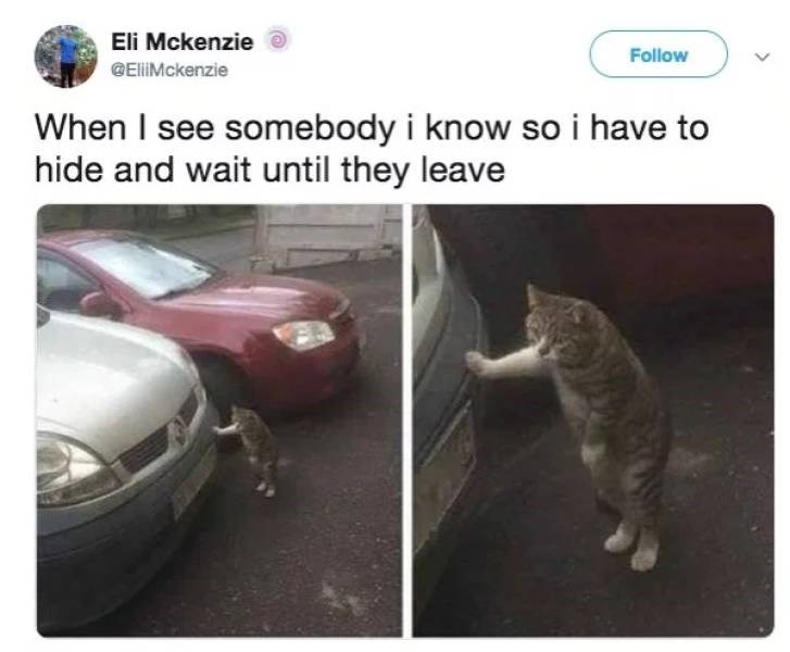 Cat - Eli Mckenzie Follow GEliMckenzie When I see somebody i know so i have to hide and wait until they leave