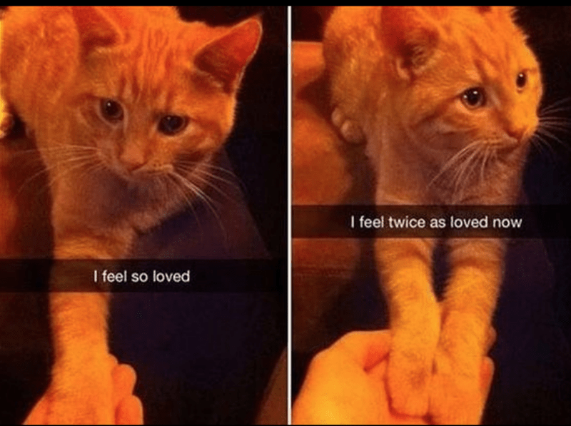 cat meme - Cat - I feel twice as loved now I feel so loved