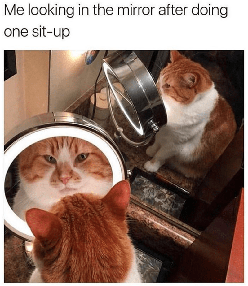 cat meme - Cat - Me looking in the mirror after doing one sit-up