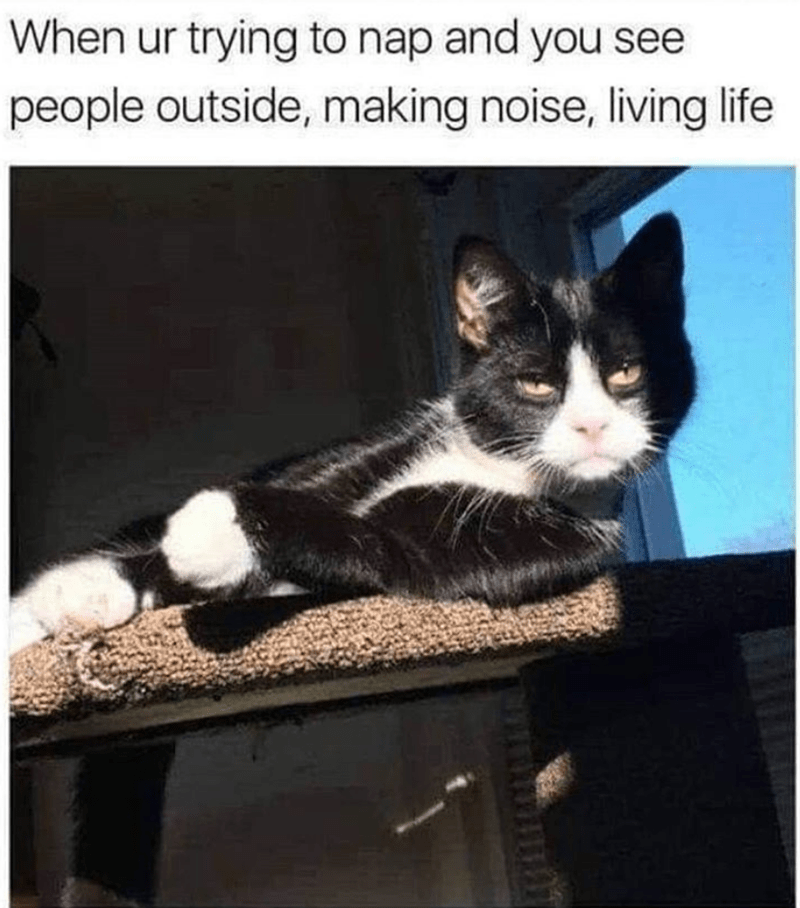 cat meme - Cat - When ur trying to nap and you see people outside, making noise, living life W