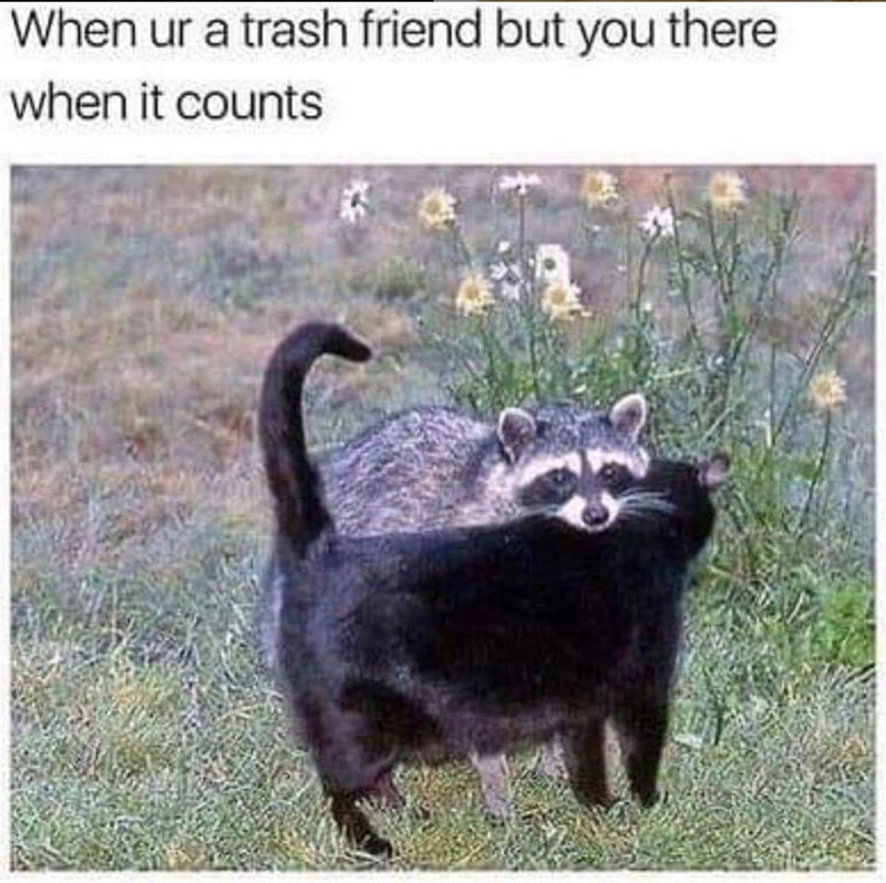 cat meme - Photo caption - When ur a trash friend but you there when it counts