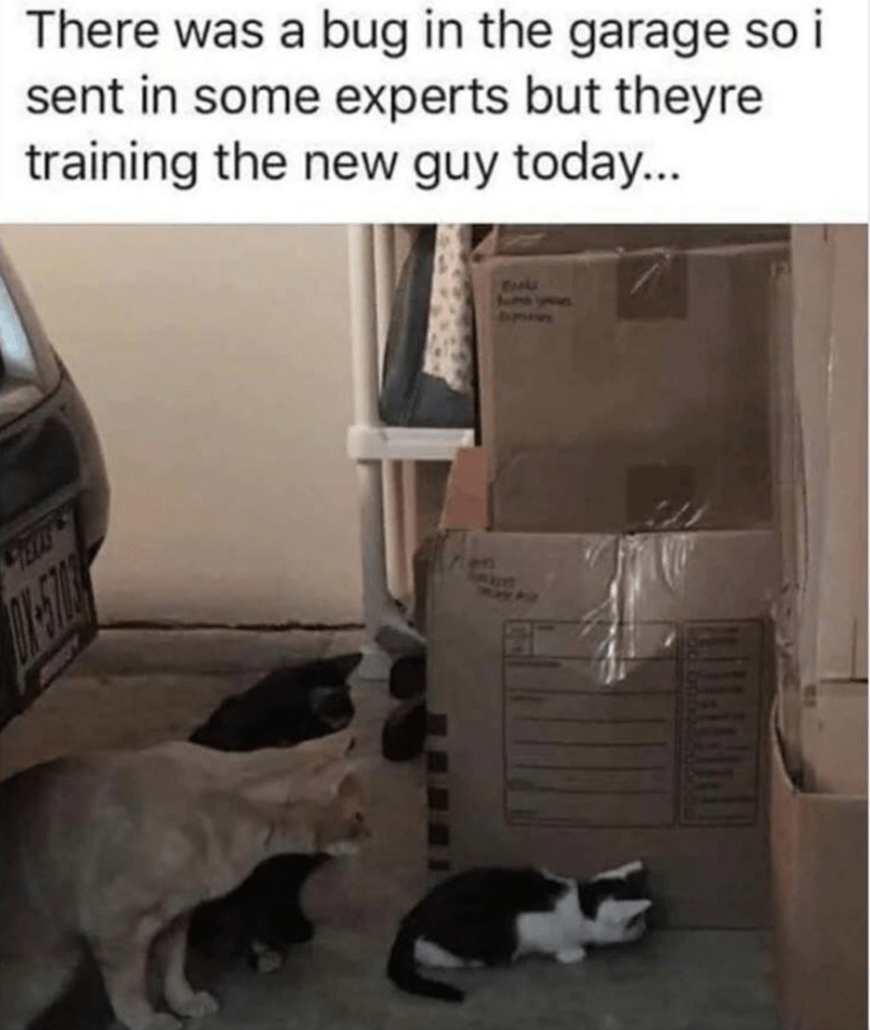 cat meme - Cat - There was a bug in the garage so i sent in some experts but theyre training the new guy today... ELS