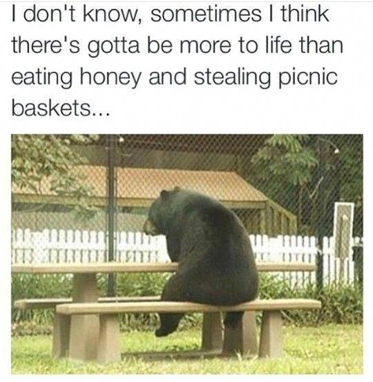 Adaptation - I don't know, sometimes I think there's gotta be more to life than eating honey and stealing picnic baskets... ET3 TTL KMATS
