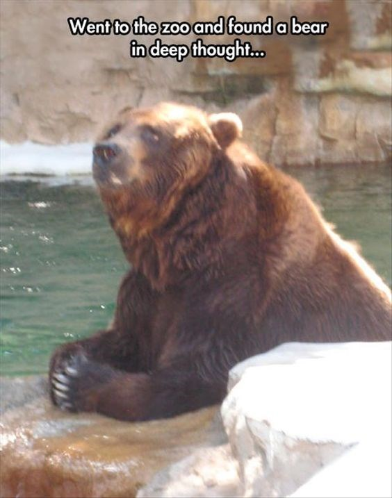 Brown bear - Went to the zoo and found a bear in deep thought...