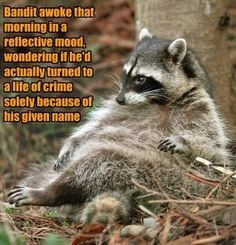 Vertebrate - Bandit awoke that morning in a reflective mood, wondering if he'd actually turned to alife of crime solely because of his given name