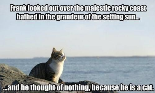 Cat - Franklookedoutoverthe majesticrockycoast bathed in the grandeurofthesettingsu. and he thought of nothing,because heisacat,