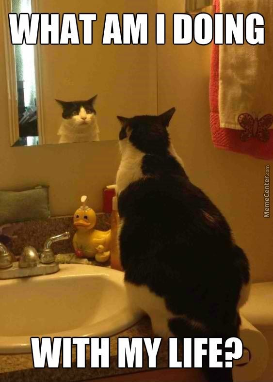 Cat - WHAT AM I DOING WITH MY LIFE? MemeCenter.com