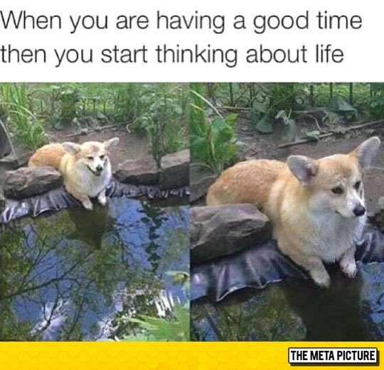 Vertebrate - When you are having a good time then you start thinking about life THE META PICTURE