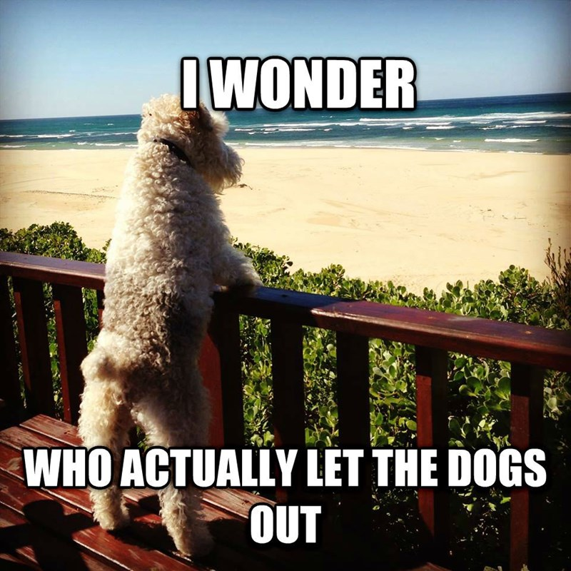 Canidae - IWONDER WHO ACTUALLY LET THE DOGS OUT