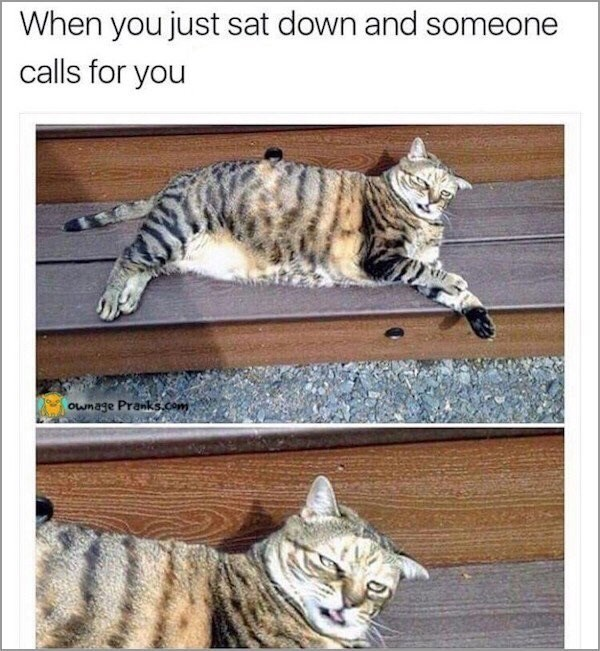 Cat - When you just sat down and someone calls for you Ownage Pranks.com