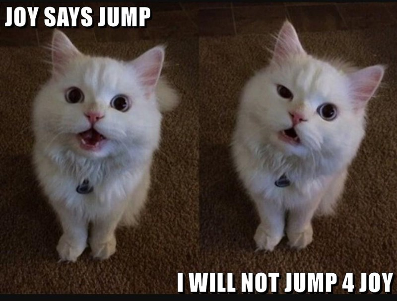 pun about a cat named joy and he will not jump for that cat, will not jump for joy