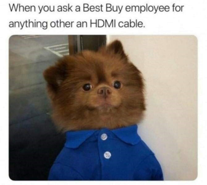 """Caption that reads, """"When you ask a Best Buy employee for anything other than an HDMI cable"""" above a pic of a little dog looking nervous wearing a Best Buy shirt"""