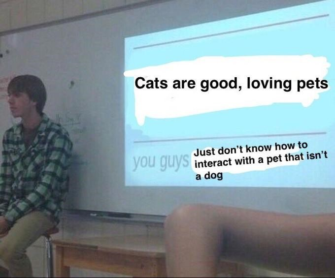 Text - Cats are good, loving pets Just don't know how to you guys interact with a pet that isn't a dog