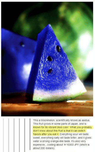 This a Moonmelon, sclentifically knows as asidus. This fruit grows in some parts of Japan, and is known for its vibrant blue color. What you probably don't know about this fruit is that it can switch favors after you eat it. Everything sour will taste sweet, everything salty will taste bitter, and it gives water a strong orange-like taste. Its also very expensive...costing about ¥16000 JPY (which is about 200 dollars)