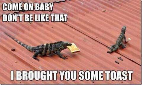 Lizard - COME ON BABY DON'T BELIKE THAT IBROUGHT YOU SOME TOAST