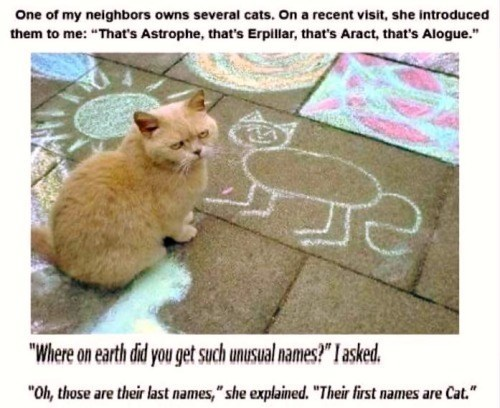 """Cat - One of my neighbors owns several cats. On a recent visit, she introduced them to me: """"That's Astrophe, that's Erpillar, that's Aract, that's Alogue."""" """"Where on earth did you get such unusual names?"""" I asked """"Oh, those are their last names,""""she explained. """"Their first names are Cat."""