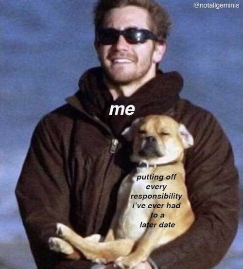 Dog - @notallgeminis me putting off every responsibility i've ever had to a later date