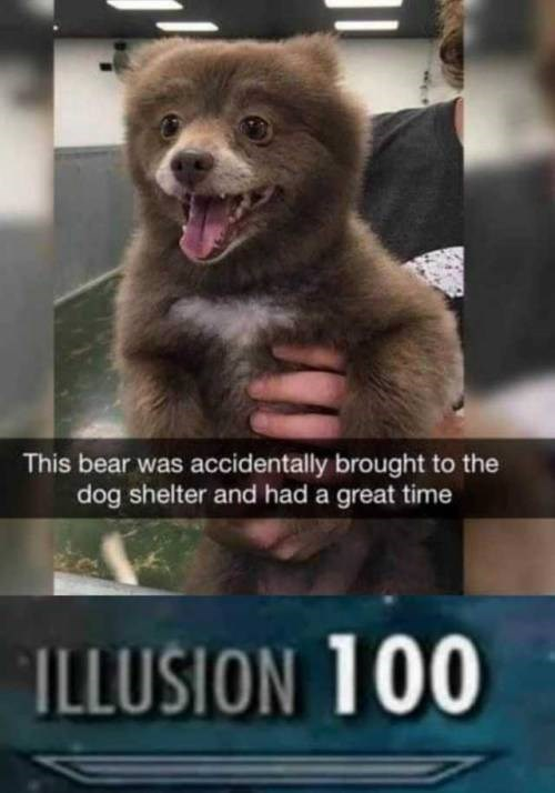 Canidae - This bear was accidentally brought to the dog shelter and had a great time ILLUSION 100