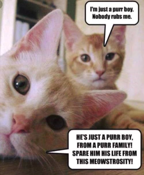 Cat - I'm just a purr boy. Nobody rubs me. HE'S JUST A PURR BOY FROM A PURR FAMILY! SPARE HIM HIS LIFE FROM THIS MEOWSTROSITY!