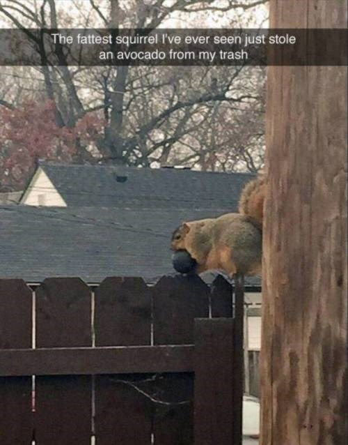 Zoo - The fattest squirrel I've ever seen just stole an avocado from my trash