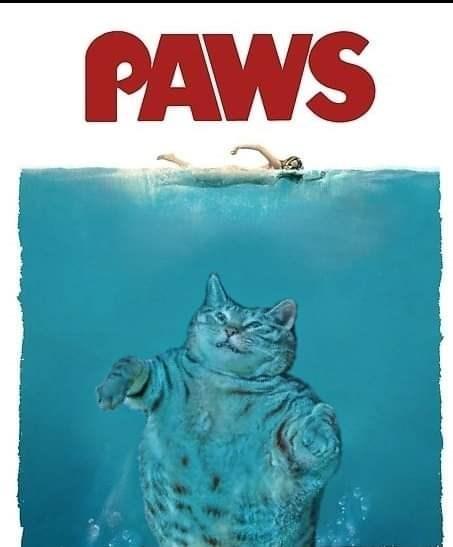Cat - PAWS