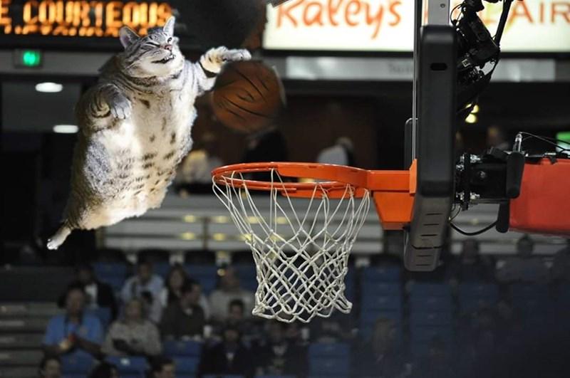 Basketball - E COURTEOUS kateys AIR
