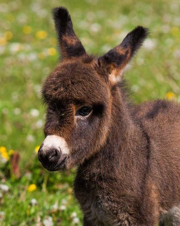 portrait of a tiny donkey