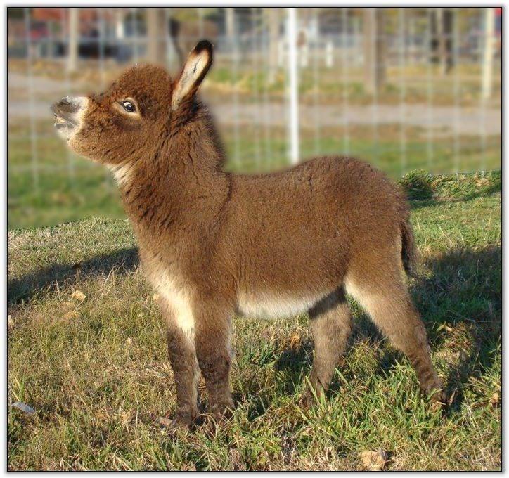 fluffy tiny donkey lifting its head