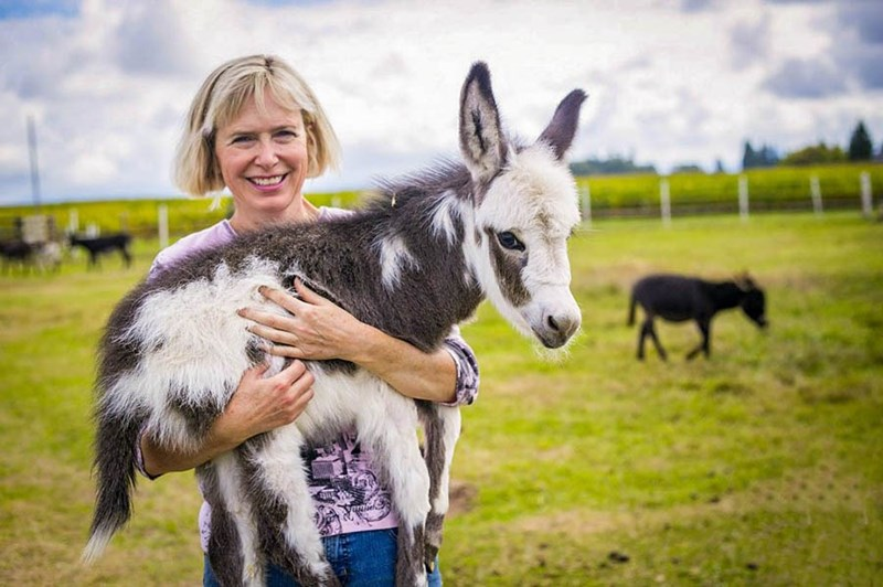 woman holding a tiny donkey with white and brown fur