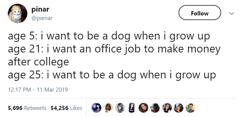 Text - pinar Follow @pienar age 5: i want to be a dog when i grow up age 21: i want an office job to make money after college age 25: i want to be a dog whern i grow up 11 Mar 2019 12:17 PM 5,696 Retweets 54,256 Likes