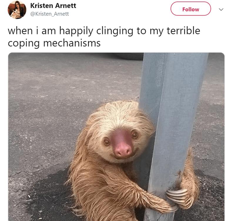 Sloth - Kristen Arnett Follow @Kristen_Arnett when i am happily clinging to my terrible coping mechanisms