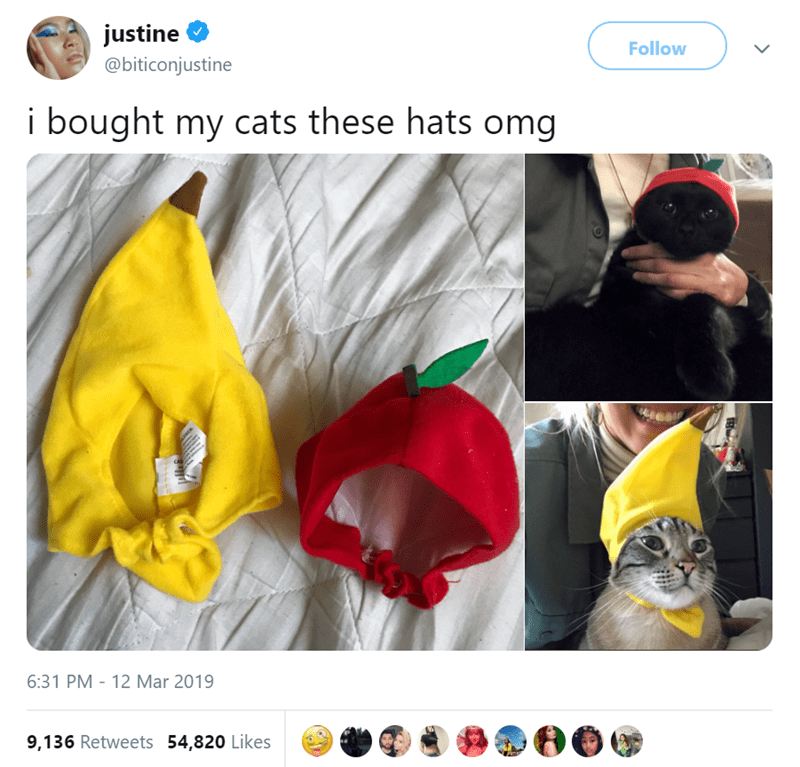 Yellow - justine Follow @biticonjustine i bought my cats these hats omg 6:31 PM - 12 Mar 2019 9,136 Retweets 54,820 Likes