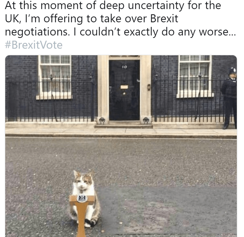 Canidae - At this moment of deep uncertainty for the UK, I'm offering to take over Brexit negotiations. I couldn't exactly do any worse... #BrexitVote 10