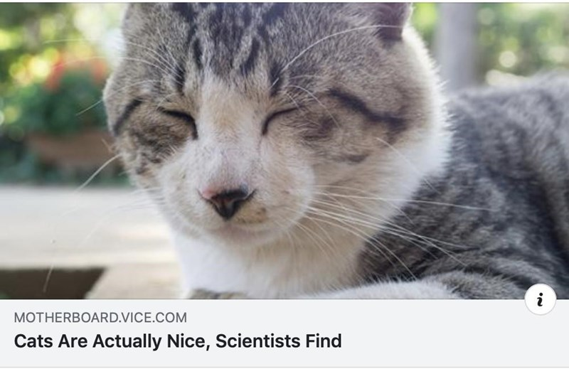 Cat - MOTHERBOARD.VICE.COM Cats Are Actually Nice, Scientists Find