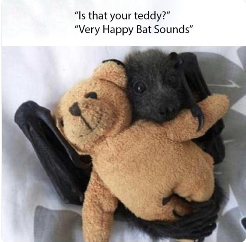 "Stuffed toy - ""Is that your teddy?"" ""Very Happy Bat Sounds"""