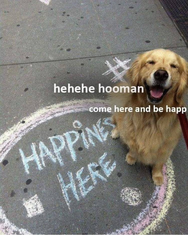 Dog - hehehe hooman come here and be happ HAPPINES HERE