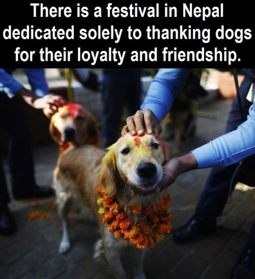 Canidae - There is a festival in Nepal dedicated solely to thanking dogs for their loyalty and friendship.